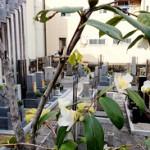 墓所周辺は色とりどりの花が咲きます