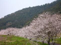 京都永代供養墓, 阿弥陀寺, 南丹市八木, 納骨堂